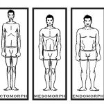 Ektomorph Endomorph Mesomorph Körpertypen Lüge
