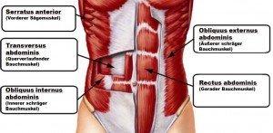 die besten Bauchmuskelübungen, Bauchmuskeltraining