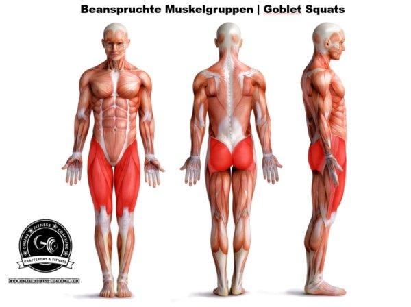 Muskelgruppen Goblet Squat