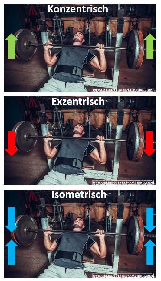 Konzentrisch Exzentrisch Isometrisch Bewegung Muskelaufbau