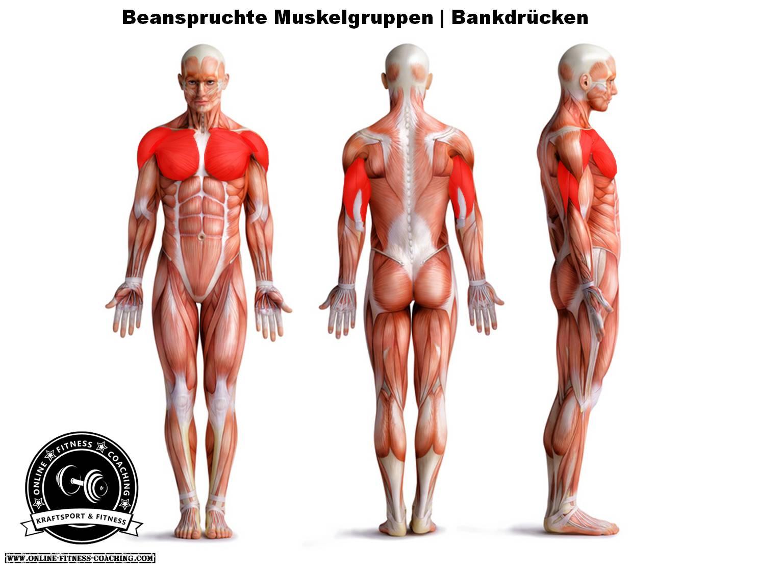 Bankdrücken Muskelgruppen