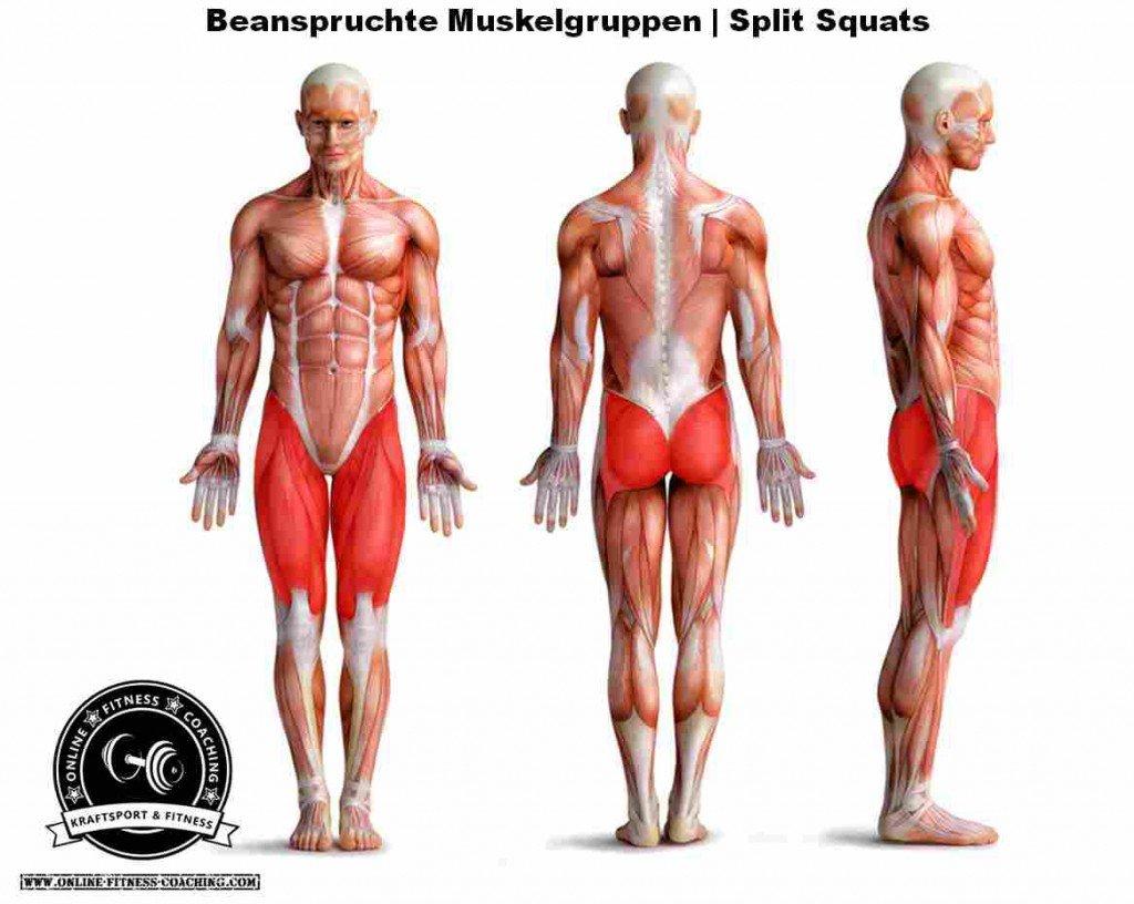 Split Squats Muskelgruppen