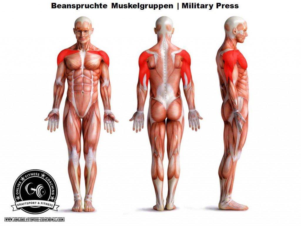 Military Press Muskelgruppen