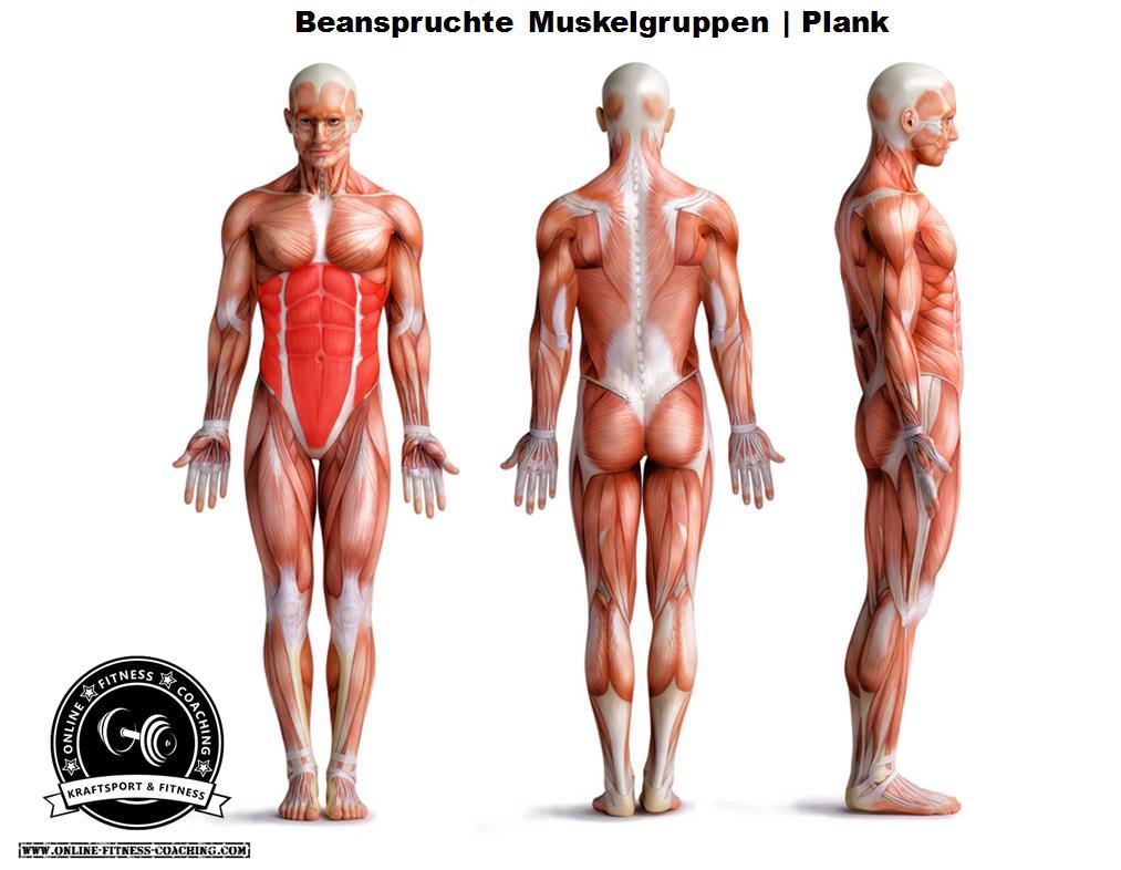 Plank Muskeln Unterarmstütz