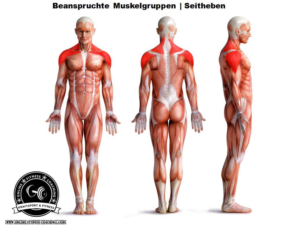 Seitheben Muskelgruppen