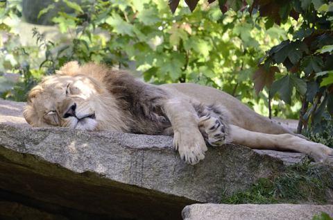 Regeneration und Schlaf