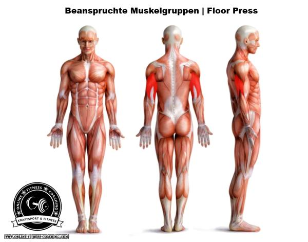 Floor Press Muskelgruppen