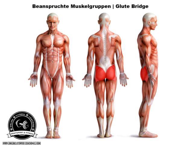 Glute Bridge: Richtige Technik & Ausführung von Beckenheben