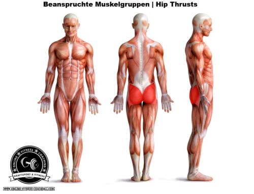 Hip Thrusts