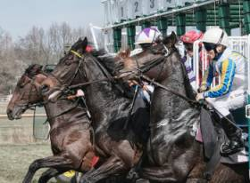 Pferde Pulsuhr